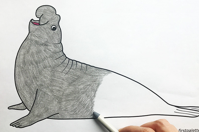 Elephant Seal Coloring Page