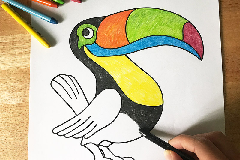 Toucan Free Printable Templates Amp Coloring Pages
