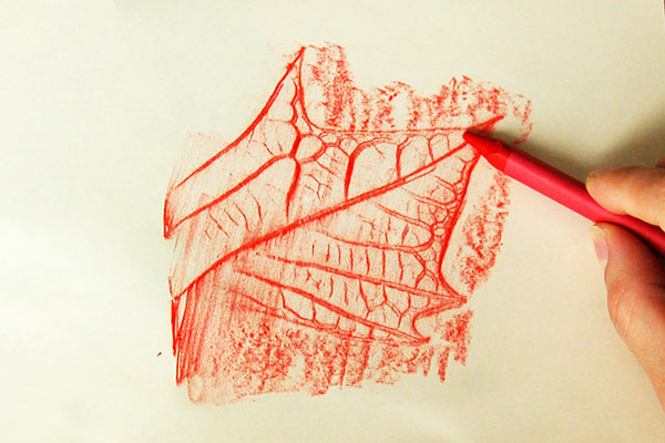 STEP 4 Leaf Rubbings