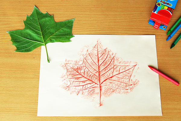 STEP 6 Leaf Rubbings