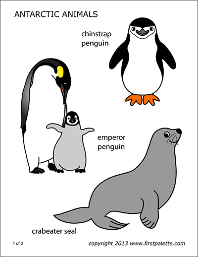 graphic about Printable Penguins titled Penguin No cost Printable Templates Coloring Internet pages