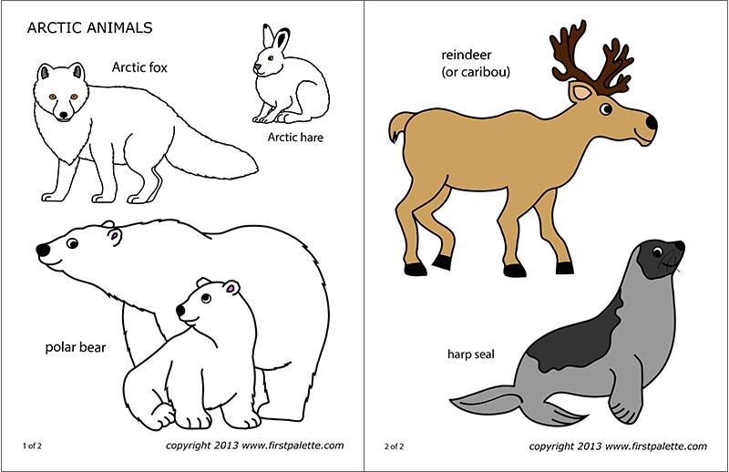 Arctic Polar Animals Free Printable