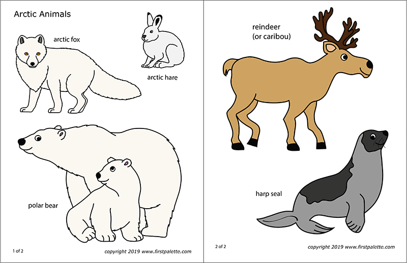 Arctic Polar Animals Free Printable Templates Coloring Pages Rhfirstpalette: Arctic Animals Printable Coloring Pages At Baymontmadison.com