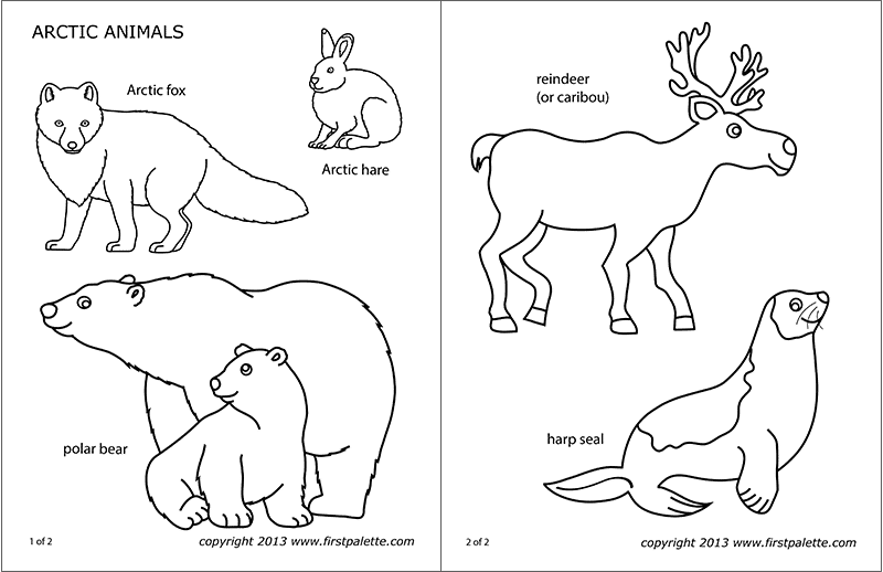 arctic polar animals free printable templates coloring pages. Black Bedroom Furniture Sets. Home Design Ideas