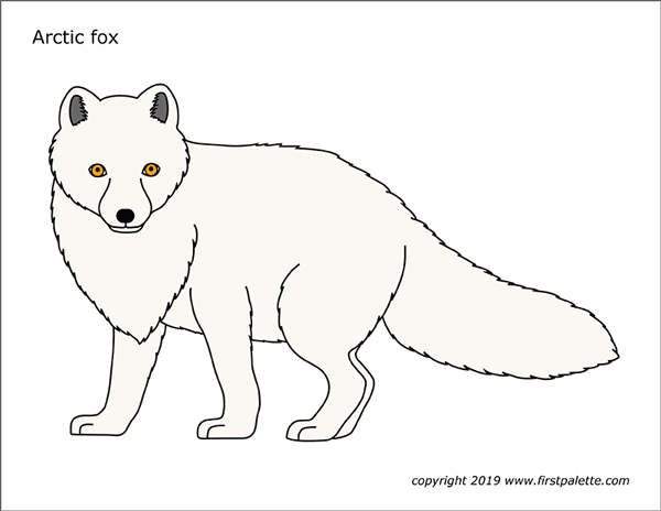 Printable Colored Arctic Fox