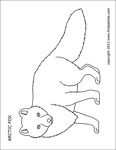 Printable Arctic Fox