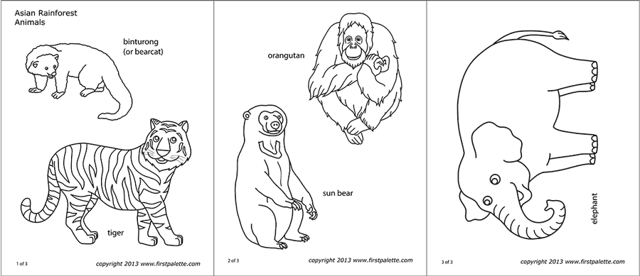 asian jungle or rainforest animals free printable templates coloring pages. Black Bedroom Furniture Sets. Home Design Ideas
