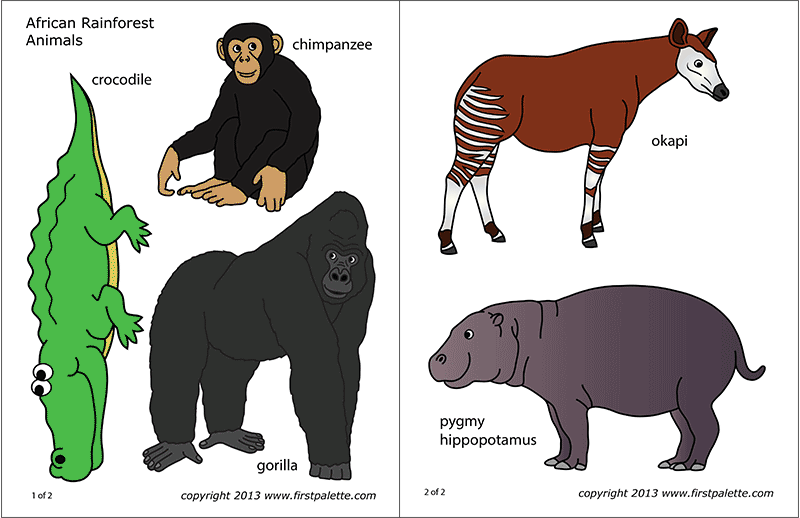 Printable Colored African Jungle or Rainforest Animals