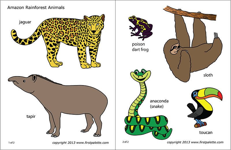 graphic about Printable Jungle Animals known as Amazon Jungle or Rainforest Pets No cost Printable