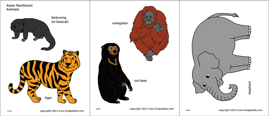 Printable Asian Rainforest Animals