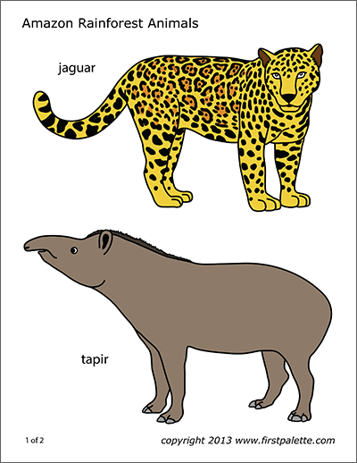 Printable Amazon Rainforest Animals