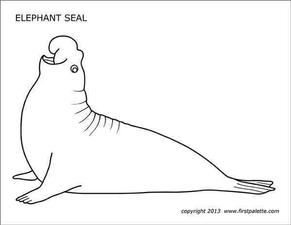 Printable Elephant Seal Coloring Page