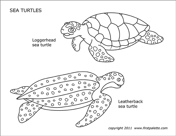 - Sea Turtles Free Printable Templates & Coloring Pages FirstPalette.com