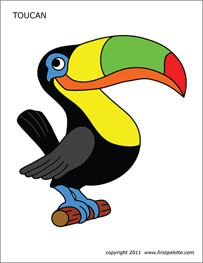 Colored Toucan